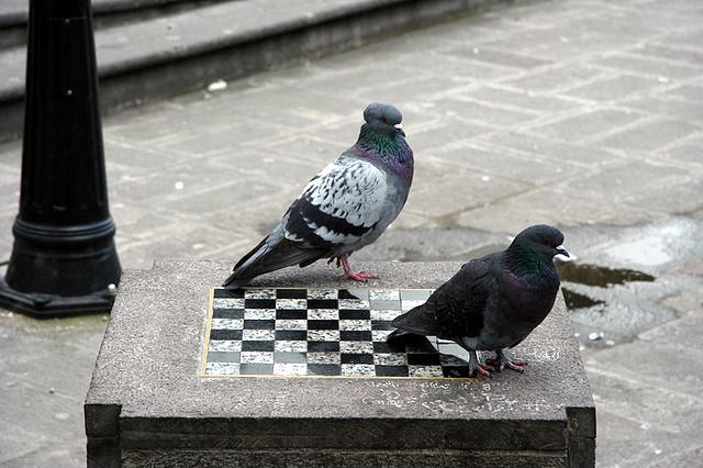 Holubí šach s homeopatmi
